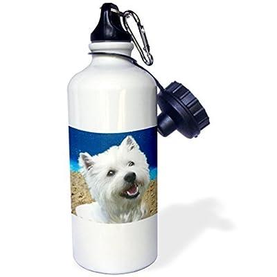 Statuear West Highland terrier en aluminium 567gram Bouteille d'eau 600ml Cadeau