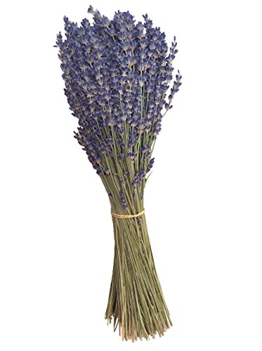 """zziggysgal Lavender Bundle """"Royal Velvet"""" - a lovely deep purple variety, recently harvested and dried from by zziggysgal"""