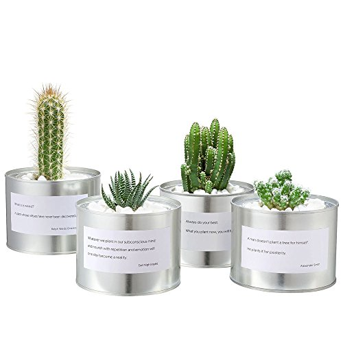 mkono-metal-succulent-planters-cactus-pots-with-proverbs-for-office-and-indoor-set-of-4