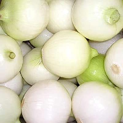 500 CRYSTAL WHITE WAX PEARL ONION Allium Cepa Vegetable Seeds : Onion Plants : Garden & Outdoor