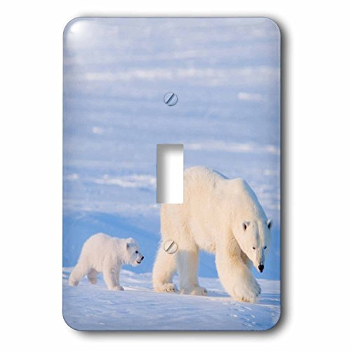 3dRose lsp_191952_1 Usa, Alaska, Arctic Nwr Polar Bear Sow with Her Cub Outside Their Den Light Switch Cover by 3dRose