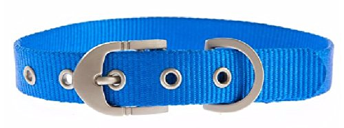 Top Paw - Classic Adjustable Buckle Dog Pet Collar (Medium, (Top Paw Adjustable Dog Collar)