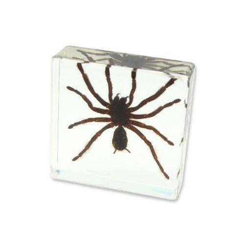 (REALBUG Tarantular Paperweight (3 x 3 x 1 1/8