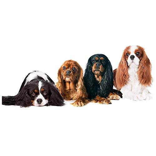(TOOGOO Diamond Painting Dog,Full Round Diamond Embroidery Cavalier King Charles Spaniel Pet Animal,Photo Custom 5D DIY)