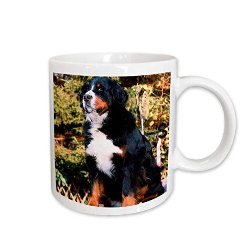 - 3dRose Bernese Mountain Dog Mug, 15-Ounce