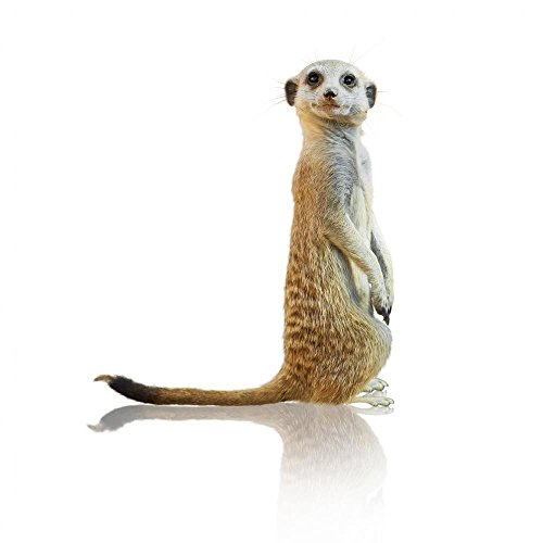Wallmonkeys Portrait of a Meerkat Peel and Stick Wall Decals WM269750 (24 in H x 24 in W)