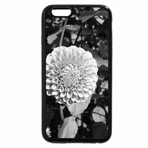 iPhone 6S Plus Case, iPhone 6 Plus Case (Black & White) - A great day at Edmonton garden 26