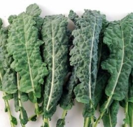 Forage Premier Kale Seeds, 1000+ Premium Heirloom Seeds, ON SALE!, (Isla's Garden Seeds), Non Gmo Organic, 90% Germination, Survival Seeds, Highest Quality.
