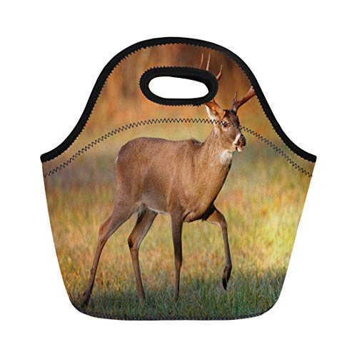 Semtomn Neoprene Lunch Tote Bag White Tailed Deer Buck in the Smoky Mountains Reusable Cooler Bags Insulated Thermal Picnic Handbag for Travel,School,Outdoors,Work