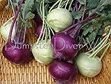 Early White & Purple Vienna KOHLRABI 325+ seeds sweet Organic Heilroom NON-GMO