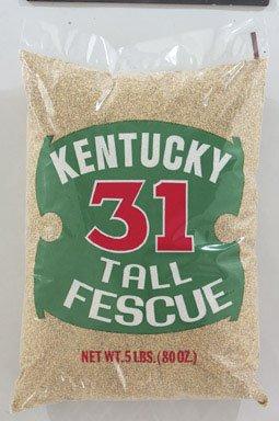 Kentucky 31 Fescue Seed - 4