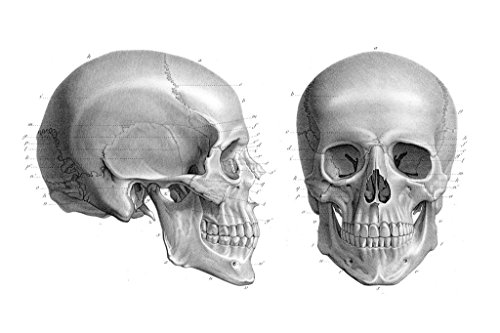 (Laminated Human Skull Anatomy Illustration 1866 Antique Textbook Art Print Sign Poster 18x12 inch)