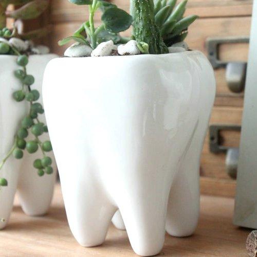 Amazon.com Ceramic Flower Pot Cute Tooth Design Color White Garden \u0026 Outdoor & Amazon.com: Ceramic Flower Pot Cute Tooth Design Color White ...