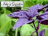 Sweet Basil Dark Opal, Purple (Herb Seeds), 500+ Premium Heirloom Seeds, ON SALE!, (Isla's Garden Seeds), 99% Purity, 85% Germination, Highest Quality!