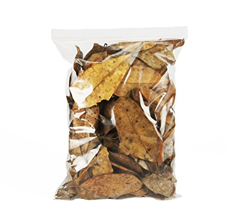 Magnolia Leaf Litter (1 Gallon)