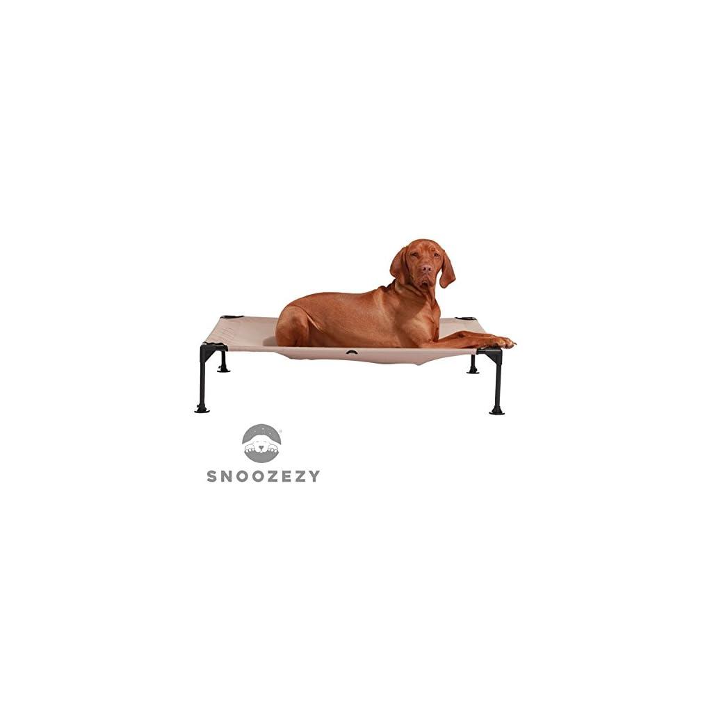 Dog on Raised Dog Bed