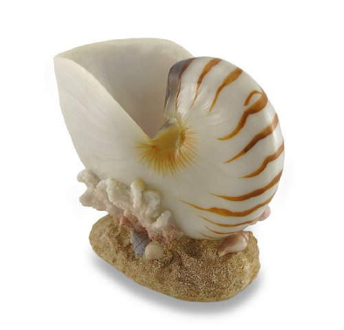 (Things2Die4 Polished Nautilus Shell Wine Holder Single Bottle Display)