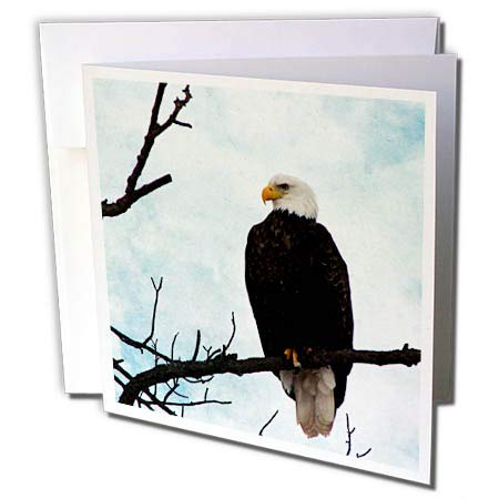 - 3dRose Cassie Peters Birds - American Bald Eagle - 1 Greeting Card with Envelope (gc_288446_5)