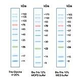GEL - Flash Protein Ladder- 10-180 kDa - 500ul , PK