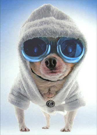 Chihuahua Hoodie Dog Birthday Card