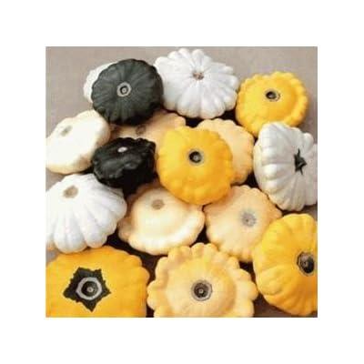 SD0574 Mixed Color Cucurbita Pepo Seeds, UFO Melon Seeds, 60-Days (8 Seeds) : Vine Plants : Garden & Outdoor
