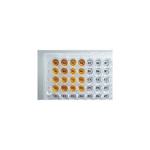 Diversified Biotech WEST-1000 Well Orienter Sticker for Microplate, 96 Well (Pack of 50)