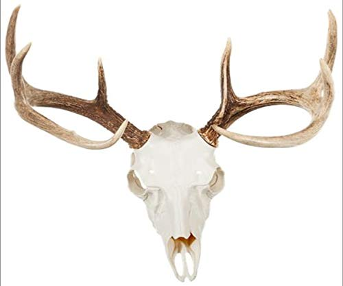 Mountain Mike's Reproductions Skull Master Antler Kit Hunting Trophy Mounts - Works with Antlers of Any Diameter, Whitetail or Mule Deer - White