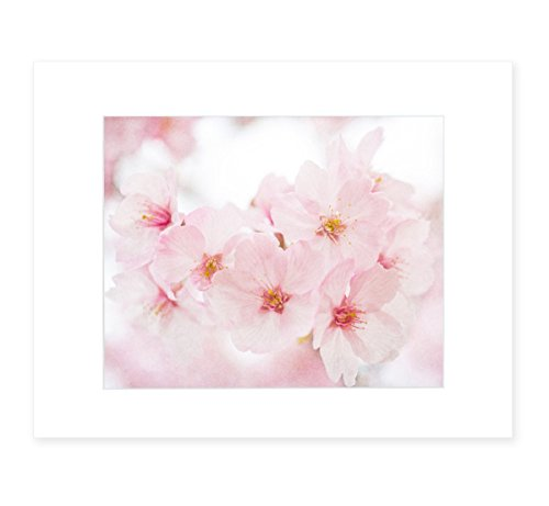 Pink Wall Art, Blossom Flower Print, Floral Wall Decor, Botanical Flower Picture, Girls Bedroom Art, 8x10 Matted Photographic Print (fits 11x14 frame), 'Cherry Blossom'