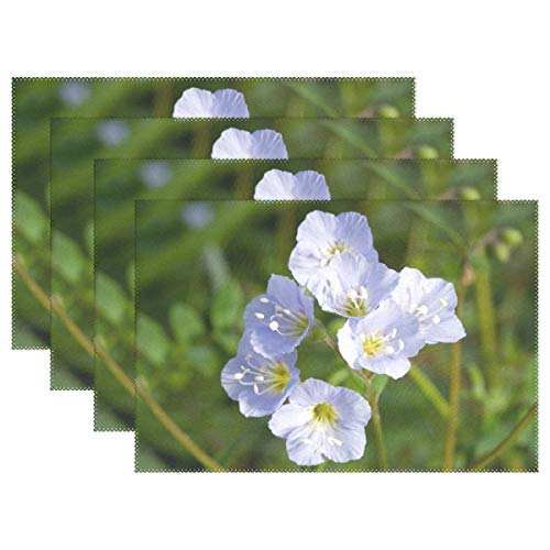 Jacobs Ladder Flower Greek Valerian Polemonium Placemats Heat Insulation Stain Resistant for Dining Table Durable Non-Slip Kitchen Table Place Mats Set of 4 ()