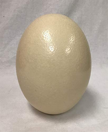 American Feathers Ostrich Eggshells - Premium Grade ()