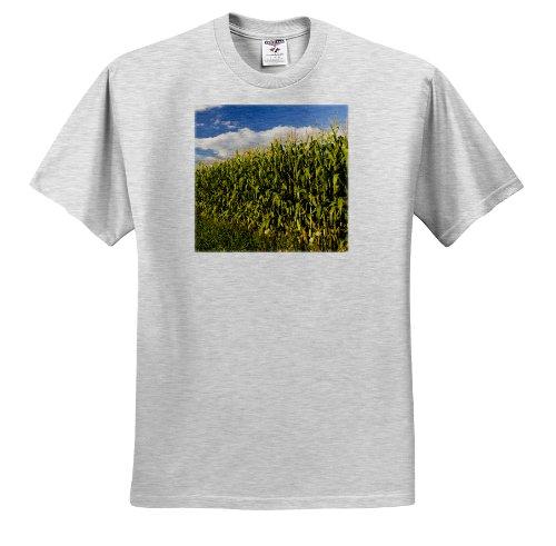 3dRose Danita Delimont - Farms - Corn field farm, Pepperell, Massachusetts - US22 JMO0256 - Jerry and Marcy Monkman - T-Shirts - Adult Birch-Gray-T-Shirt XL (ts_90852_21) (Farm Tables Massachusetts)