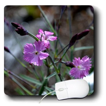 WhiteOak Photography Floral Prints - Lifes Simple Pleasures Delicate small purple flowers - MousePad (mp_127760_1)