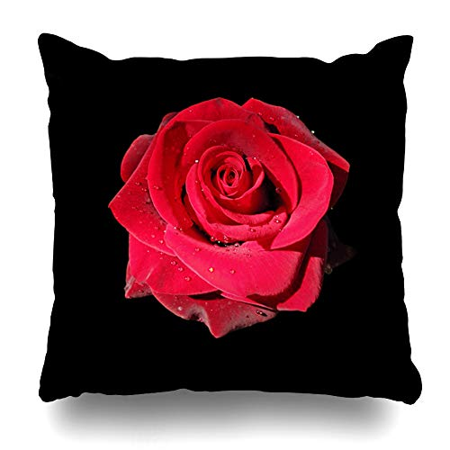 (Ahawoso Throw Pillow Cover Square 20x20 Petals Red Rose Black Nature Bloom Blossom Botany Bright Flora Zippered Cushion Case Home Decor Pillowcase)