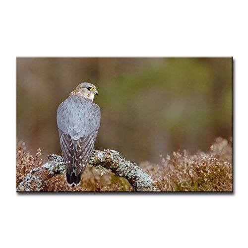 So Crazy Art® Wall Art Painting Pigeon Hawk Stand In Branch Pictures Prints On Canvas Animal The Picture Decor Oil For Home Modern Decoration Print