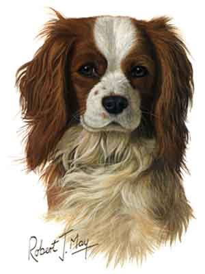 CAVALIER KING CHARLES SPANIEL PORTRAIT GREETING CARDS SET OF 20