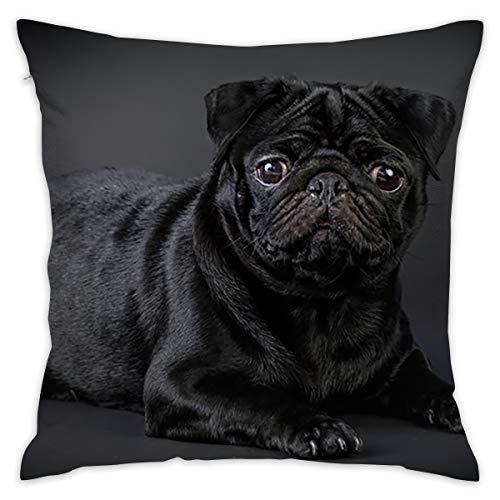ZGSDYMMB Black Pug Pillow Covers Throw Pillow Case Daily Decorations Sofa