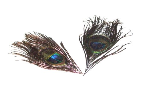 [Artificial Peacock Eye Feather 5-8