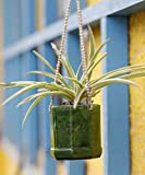 Kavi The Poetry-Art Project Hanging Planter (Multicolour)