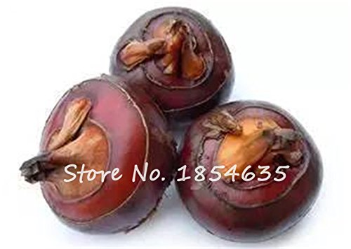 30 Water Chestnuts Seed Outdoor Pond Hydroponic Plants Delicious Tasty Brittle Fruit Seed Home Garden Blooming Plants Can Edib