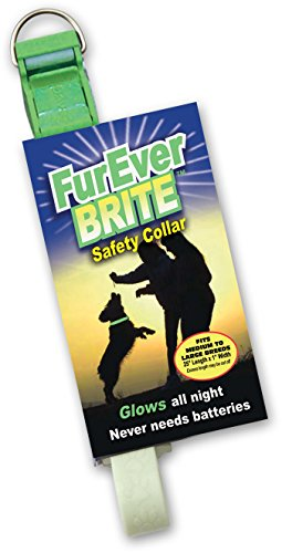 Davis FurEver Brite Glow in The Dark Pet Safety Collar, Medium to Large