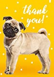 10 x Cute Dog Thank You Cards Multipack by Cracking Cards