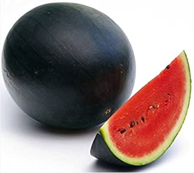 (10) Delicious Sweet Mini Sugar Baby Watermelon Seeds