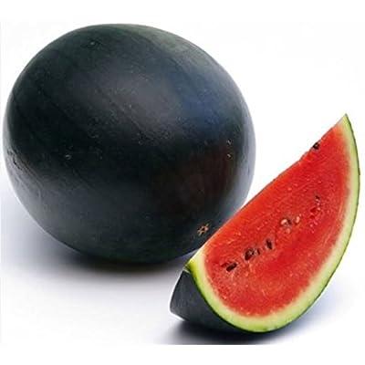 (10) Delicious Sweet Mini Sugar Baby Watermelon Seeds : Garden & Outdoor