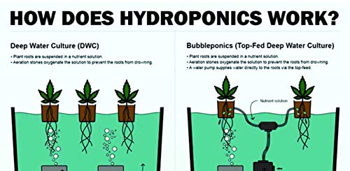 """Latest The Atwater HydroPod - Standard (4 SITE w/ 8"""" Baskets) A/C Powered Dual DWC Deep Water Culture & Recirculating Drip Hydroponic Garden System Kit - 5 Gallon Size System Hydroponic System 6"""