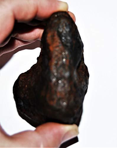 Fossil, Meteorites, & More NANTAN Iron Nickel Meteorite -Genuine-538.6 Gram + Label & COA# 14347 22o by Fossil, Meteorites, & More (Image #1)