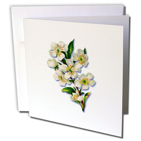 """Price comparison product image 3dRose Victorian, Magnolia Tree with Large White Blooms Greeting Cards, 6"""" x 6"""", Set of 6 (gc_171330_1)"""
