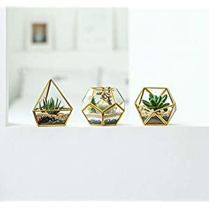 Mkono 4 Inch Mini Glass Geometric Terrarium Container Set Of 3 Modern Tabletop Planter Windowsill Decor Shelves Diy Display Box Centerpiece Gift For Succulent Air Plant Miniature Fairy Garden Gold