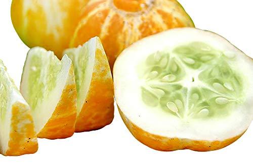 30+ ORGANICALLY Grown Lemon Cucumber Seeds, Heirloom Non-GMO, Rare, Sweet, Crisp and Juicy, from USA ()