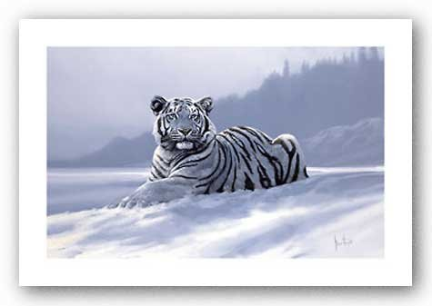 Spencer Hodge Siberian Tiger - 4