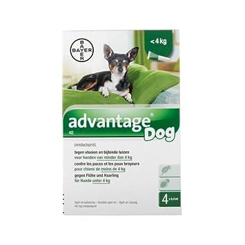 Advantage 40 (perros < 4 kg) – 4 pipetas de ...